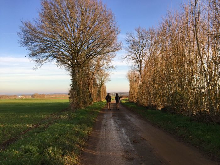 Rear view of people walking on road by trees against sky