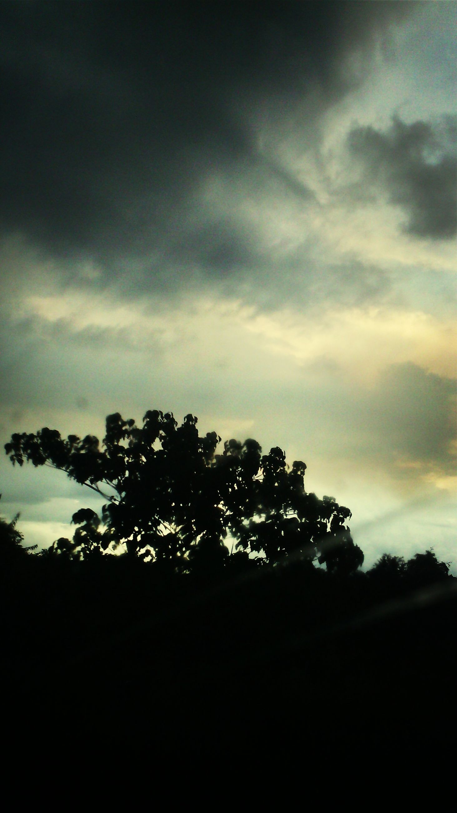 sky, silhouette, tree, cloud - sky, cloudy, low angle view, tranquility, nature, cloud, beauty in nature, growth, tranquil scene, scenics, dusk, sunset, outdoors, no people, overcast, dark, weather