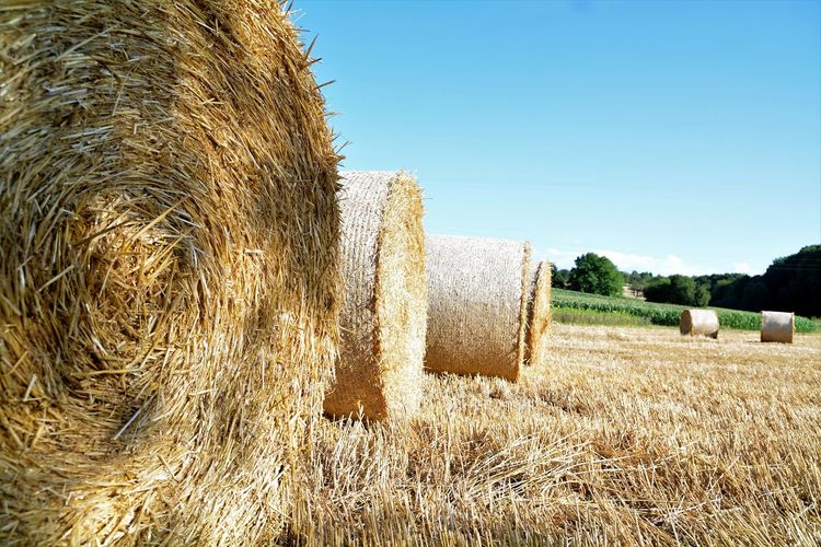 Close-up of hay bales on field against clear sky