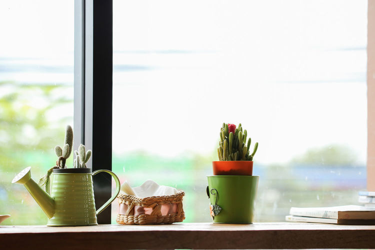 Close-up of succulent plant on window sill