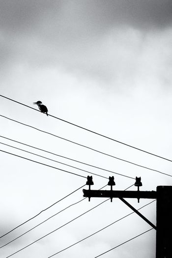 Bird Black And White Cable Cloud Cloud - Sky Monochrome Outline Perched Perching Power Cable Power Line  Silhouette Sky