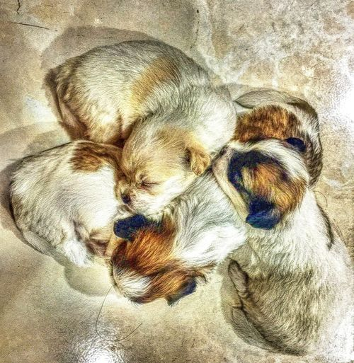 Love Amazing Unity Togetherness Siblings Puppy Puppy Love Love