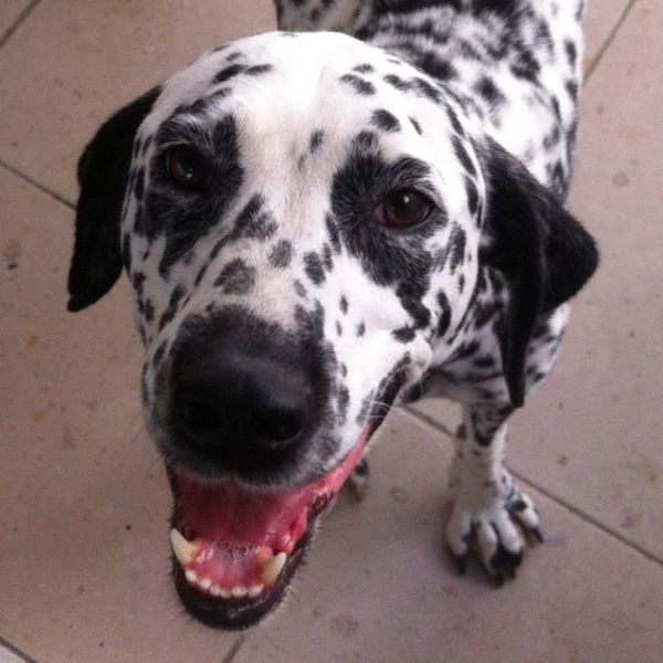 My daily guardian ❤️ Dogs Dalmatian The Best Gift Ever Black & White