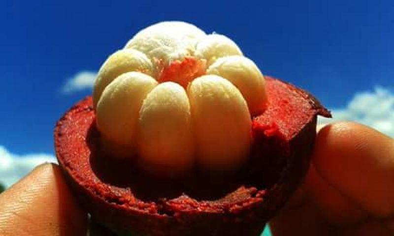 Mangostine! Fruit Mobilephotography Eyemphilippines 5megapixels Samsungphotography SamsungDuos