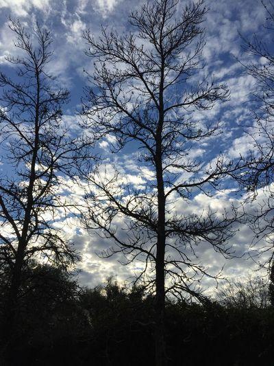As night falls... Cloudporn Branches