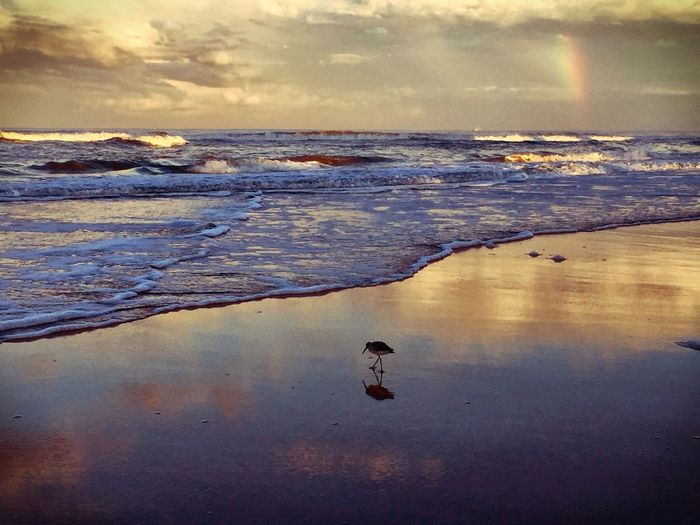 Ormand Beach Beach Beach Photography Sunset Sunset Silhouettes Birds Bird Photography Bird Rainbow Ocean Ocean View