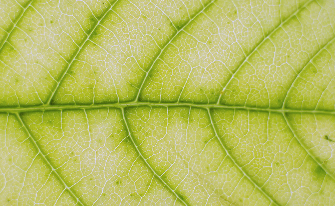 leaf, green color, backgrounds, freshness, close-up, food, full frame, nature, plant, no people, vine - plant, beauty in nature, day, outdoors