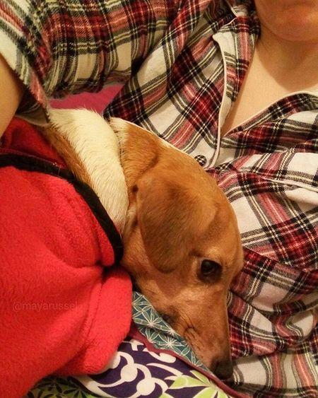 Mon humaine 👱et moi 🐶 on se fait un gros câlin devant la 📺 💕🐾🐶💞 Jackrussel Hug Love Dog Instacute Instalove Ilovemydog Iloveyou Jrt Happynewyear Bonneannee 2016
