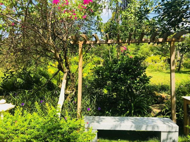 Plant Growth Nature No People Day Sunlight Outdoors Green Color Beauty In Nature Tree Boundary Fence Flower Flowering Plant Barrier Park - Man Made Space Park Grass Tranquility Front Or Back Yard