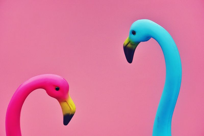 Close-up of artificial flamingoes against colored background