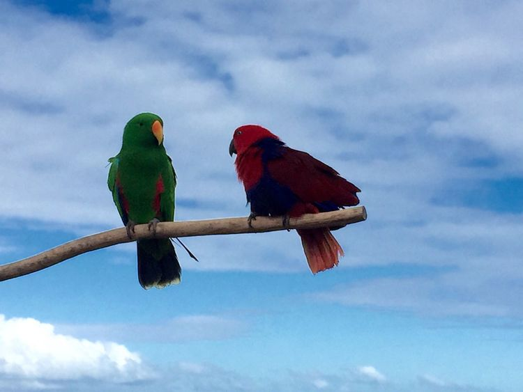 Love Birds Love Check This Out Nature Birds Colourful Beach Sky Blue Pair Sunshine Coast Caloundra Australia Outingwithfriends IPhone Iphonephotography