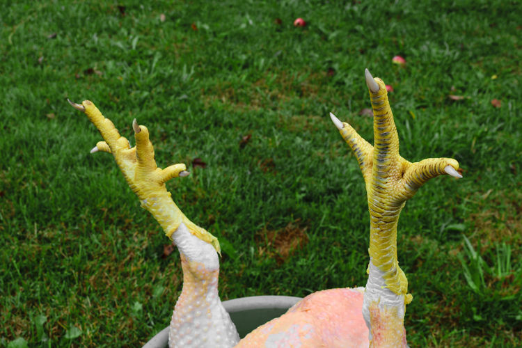 Close-up of birds on grass