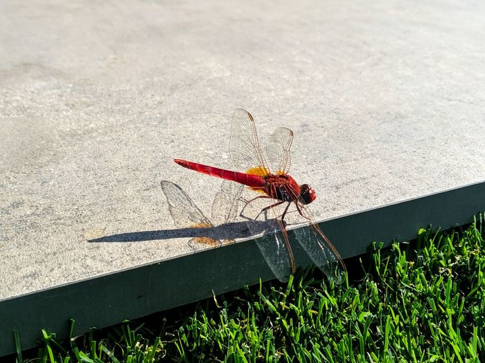 High angle view of dragonfly