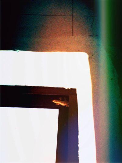 A Lizard On The Window Frame Photo-art Streamzoofamily Myfamilyhunt