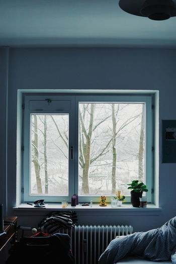 Trees seen through window at home