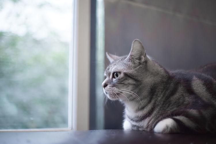 Close-up of cat on window sill