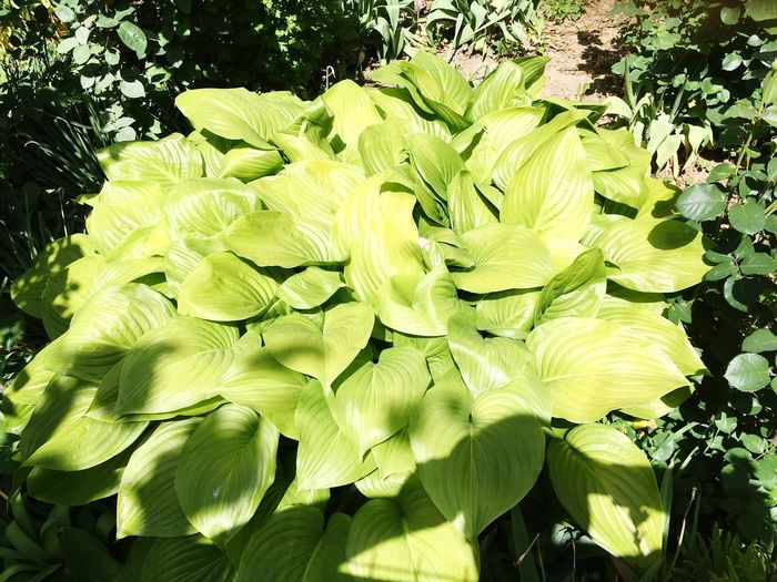 Vegetation Plant Leaf Growth Plant Part Green Color Nature No People Sunlight Day Beauty In Nature Tree Outdoors Tranquility Close-up High Angle View Leaves Freshness Water Land
