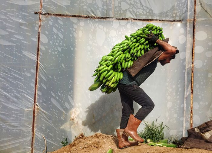 Side view of male worker carrying bananas by wall