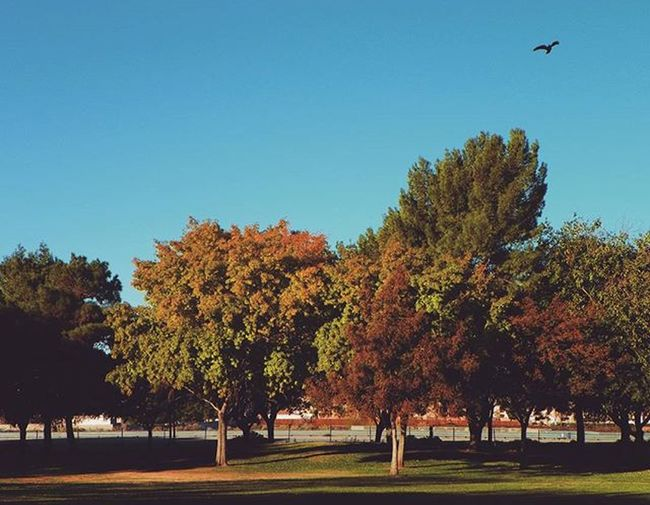 🍁Fall Trees!! 🍁 😃 Fall Fallweather Falltrees Trees Color Colorful Colorfultrees Funatthepark Park