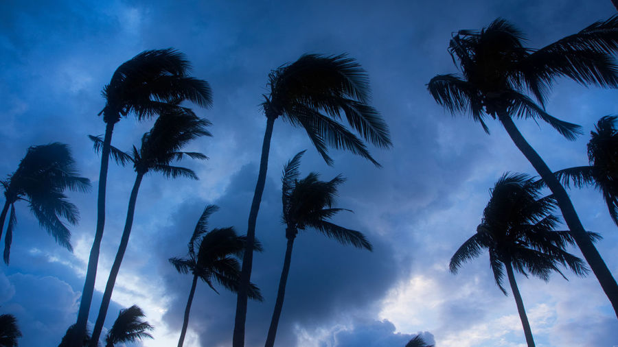 The moment just before the break of a tropical storm. Beauty In Nature Blue Blue Sky Cloud - Sky Growth Low Angle View Nature Night No People Outdoors Palm Frond Palm Tree Scenics Silhouette Sky Tranquil Scene Tranquility Tree Tree Trunk Wind EyeEmNewHere Go Higher