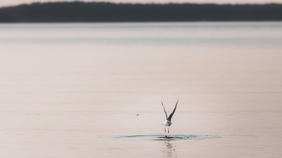 Beautiful calm lake with a single seagull flying over the surface