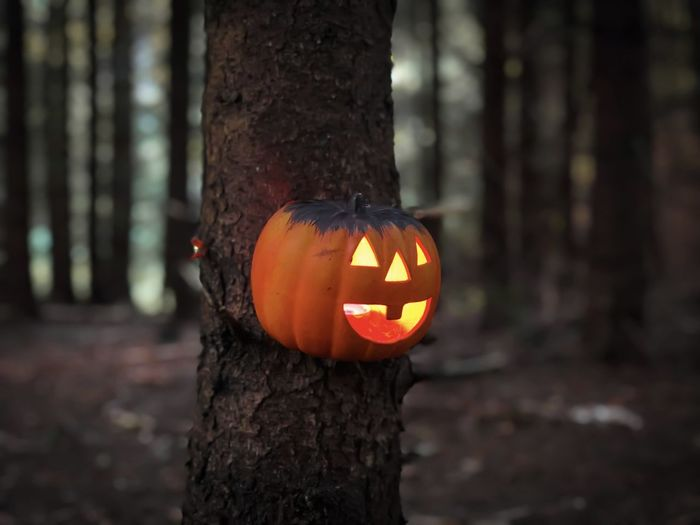 Close-up of pumpkin on tree trunk during halloween