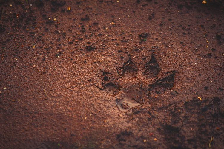 High Angle View Of Paw Print On Wet Field