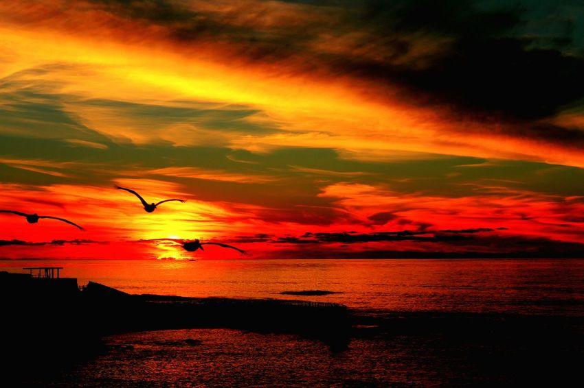 La Jolla Cove San Diego Beautiful Sunset Birds In Flight Bloody Orange goes no wrong. Landscape_photography Canon 7D Primeshots California Coast Drunk In Love California Dreamin