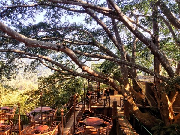 #thegiant #chiangmai #Thailand Plant Tree Nature Architecture Branch Day No People
