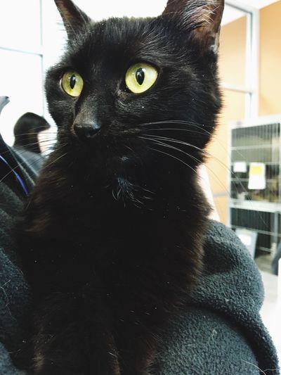 Black Cat 🖤