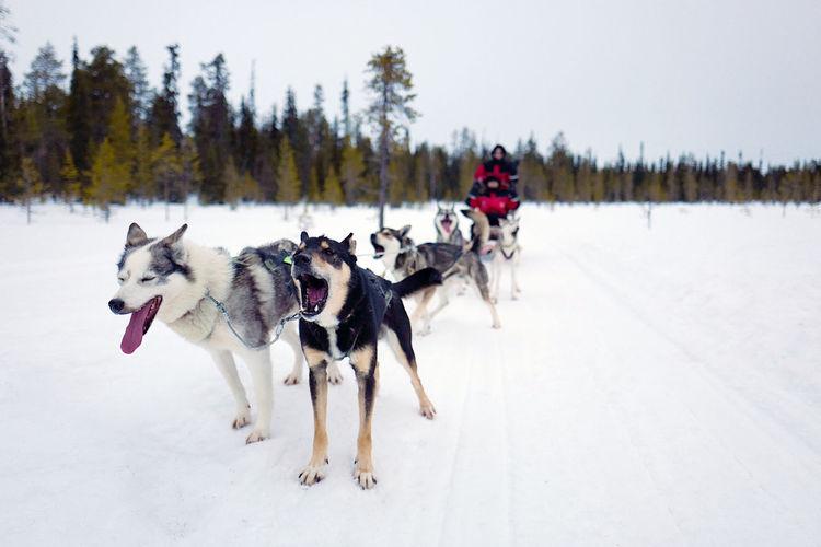 Dogs on snow field against sky
