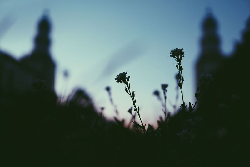 The Still Life Photographer - 2018 EyeEm Awards EyeEmNewHere Berlin The Great Outdoors - 2018 EyeEm Awards Plant Nature Silhouette Sky Growth No People Selective Focus Outdoors Beauty In Nature Day Tree Tranquility Environment Flowering Plant Flower Dusk Land Field