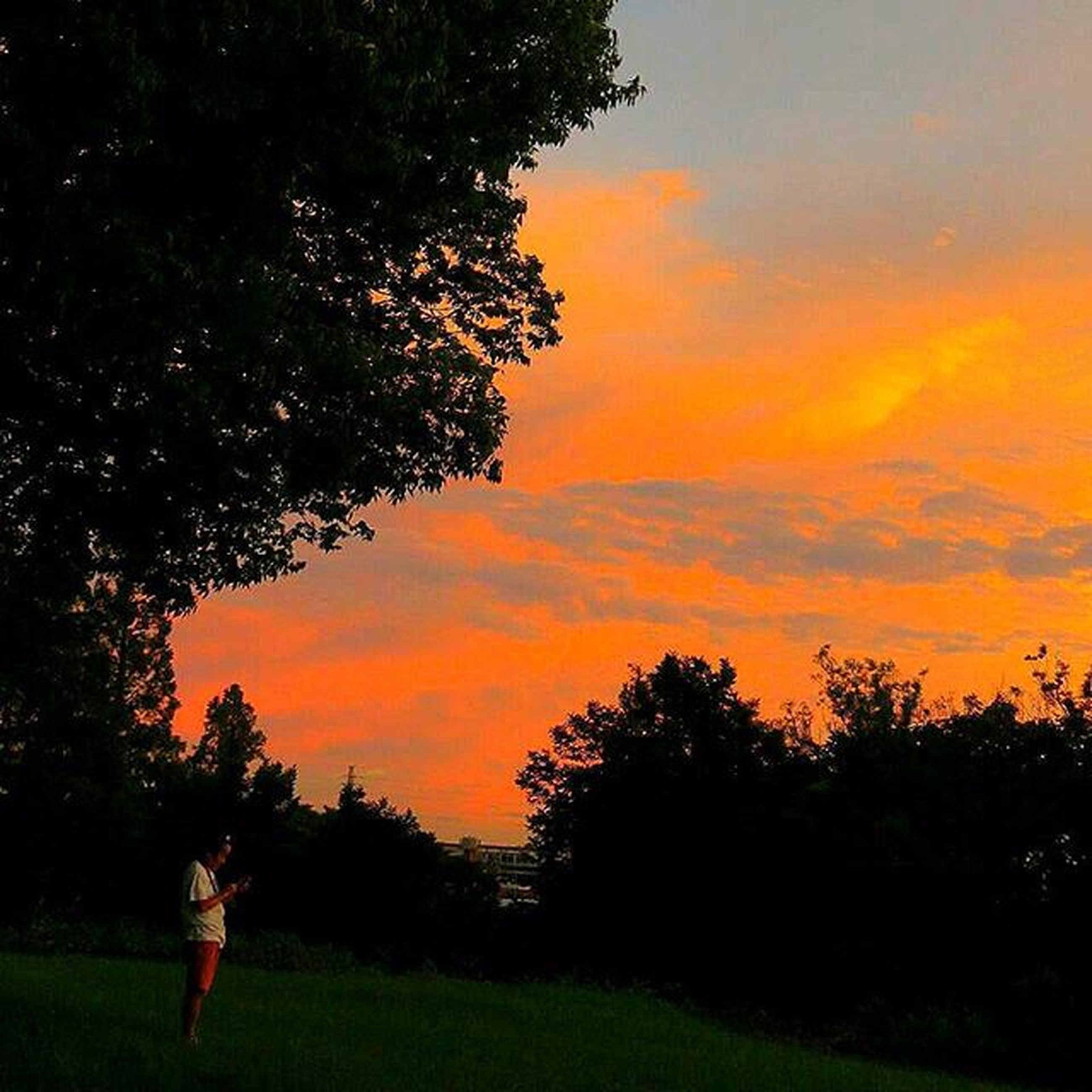 sunset, tree, sky, orange color, tranquility, beauty in nature, tranquil scene, scenics, silhouette, nature, cloud - sky, landscape, field, idyllic, growth, dramatic sky, cloud, grass, outdoors, non-urban scene