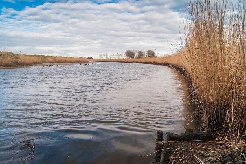 Near Hoofdplaat Sony A700 EyeEm Market © The Netherlands Zeeuws Vlaanderen Cloud - Sky Day Drainage Channel Nature Scenics Sky Tranquil Scene Tranquility Tree Water Zeeland