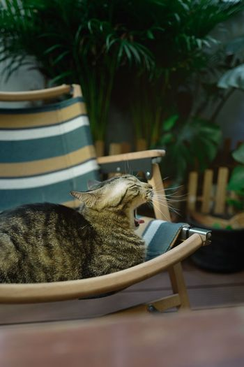 Cat relaxing on chair