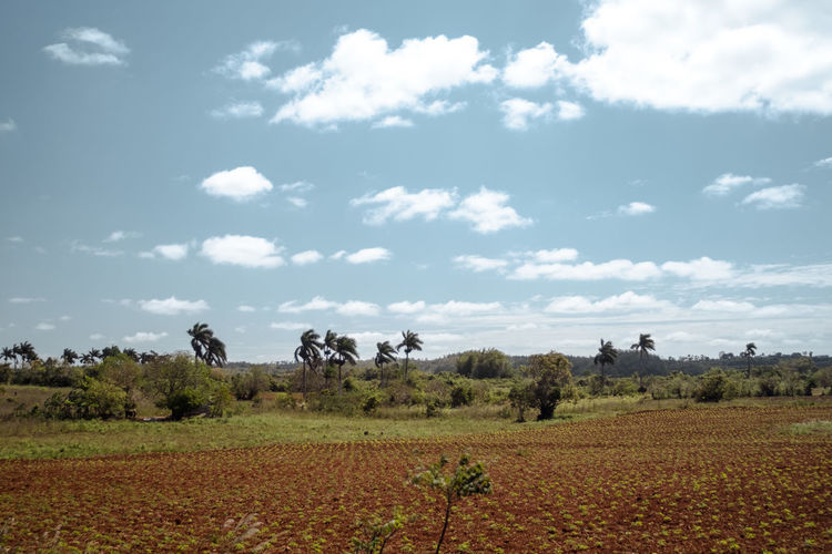 Pass by Landscape Environment Sky Field Plant Cloud - Sky Land Tree Scenics - Nature Beauty In Nature Tranquil Scene Day Nature Rural Scene Tranquility Growth Agriculture No People Outdoors Farm Palm Trees