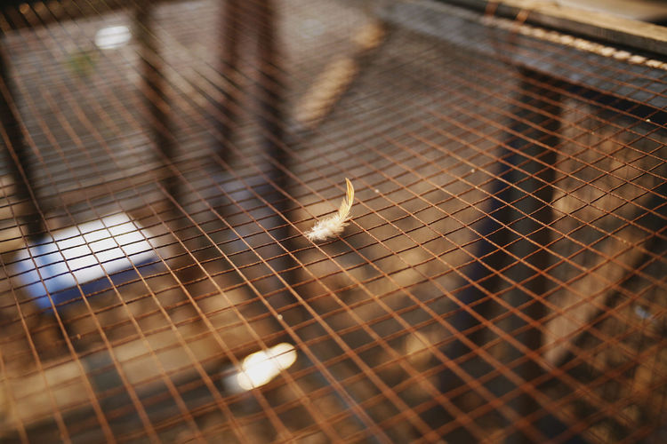 Fur Animal Themes Animal Close-up No People Selective Focus Focus On Foreground Animal Wing Zoology Arachnid Cage