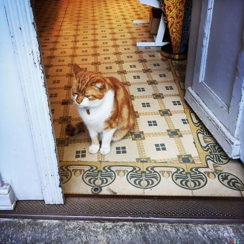 Zürich Cat Russian Shop Tiles Green Yellow White Door Welcome Home Welcome In