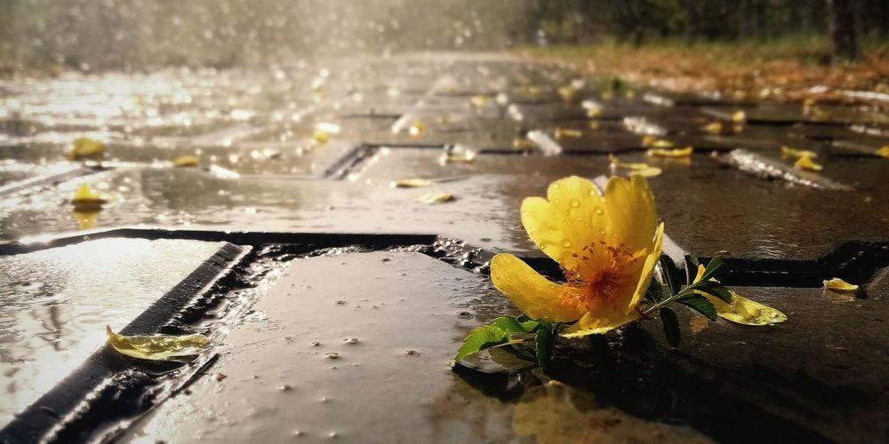 Water RainDrop Yellow Puddle Wet Drop Rain Rainy Season Close-up