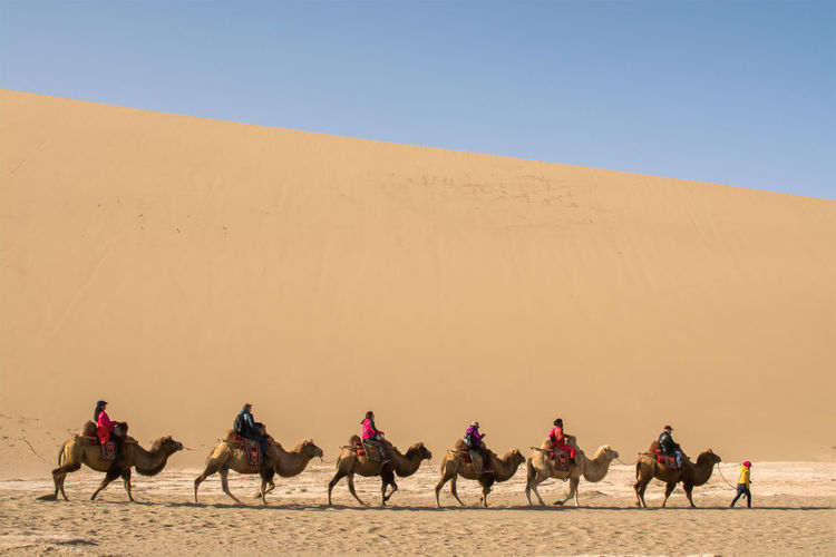 View of people riding kamels in desert against sky