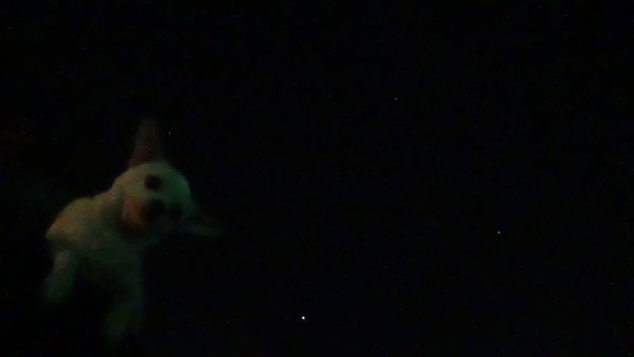 Chiwawa Chiwawa Love Chiwawa Puppy Dog Dog And Stars Star