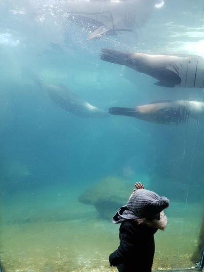 Kindliche Faszination Zoo Meer Child Childhood Fascination Seerobben 2yearsoldboy Son любовь Water Swimming Underwater Sea Life Aquarium