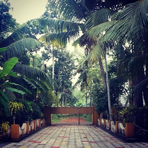 Driveway to my Ancestral Home ... Nativeplace ... Kottayam ... Kumarakam ... Perumpallil ... Kerala Trivandrum India
