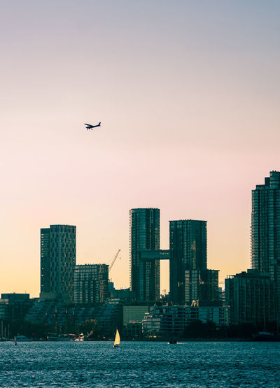 Bird flying over sea and buildings in city