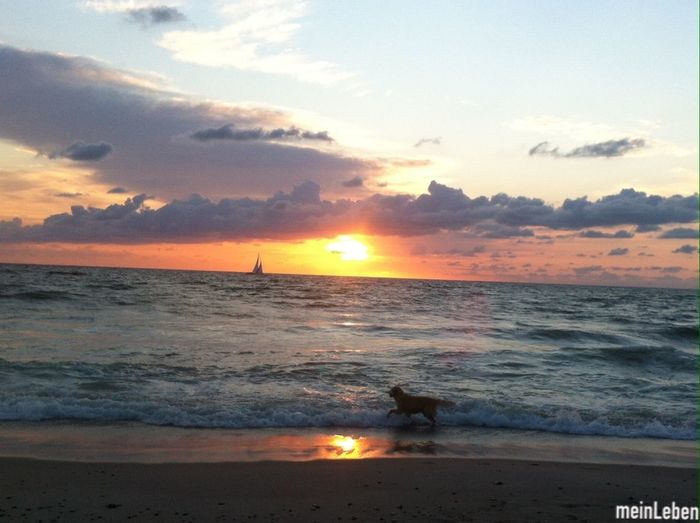 Best Place to be with my Friends and doggy:) Where Do You Swarm? What Does Peace Look Like To You? Sunset Hanging Out