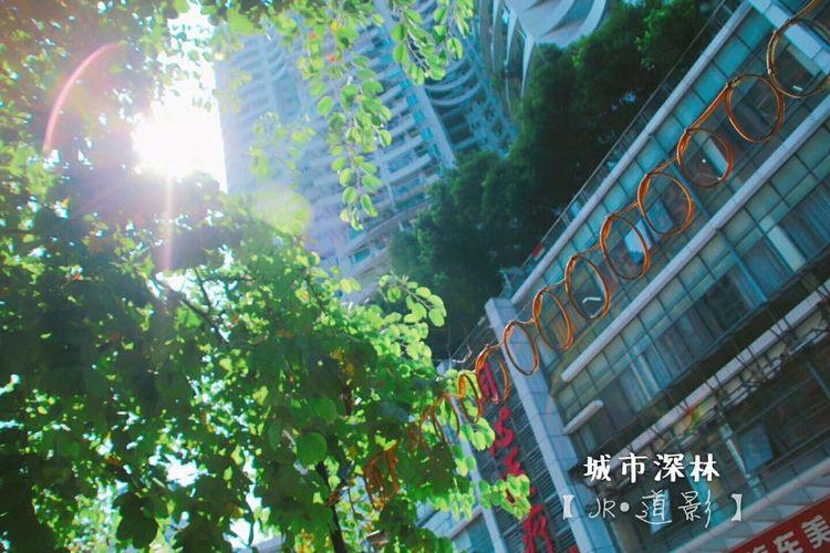 《城市深林》-【JR•道影】 我们是不是忘记了绿野仙踪? City Building Exterior Built Structure Architecture City Life No People Outdoors Tree Day Cityscape Nature Sky