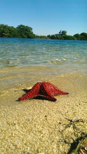 happiness isnt seeing you have reached the shore but knowing you are still alive Starfish  Beachbeachandbeach Sea Marineanimals