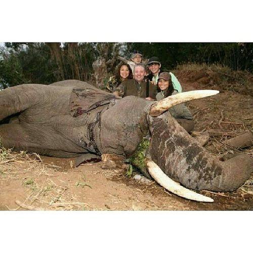 عائلة ثرية قتلت فيل بينما كان يأكل ثم التقطت صورة تذكارية بجانبه الصورة تبين أن هناك 5 حيوانات وفيل واحد .... الى_احدهم الحيوانات الرفق Repost truth twitter mydubai