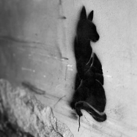 Streetart Art Wallpainting Graffiti Cat Catface Catstagram Catnose Cute Catsofinstagram Lovecats