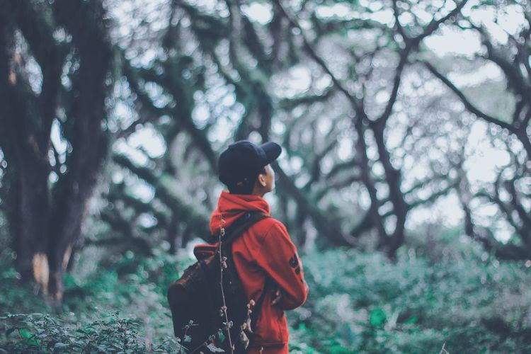 Rear view of boy in forest